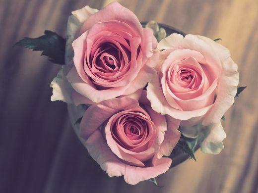 rose-3072698_960_720